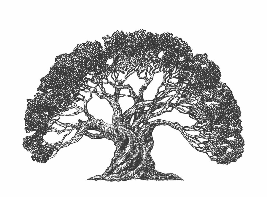 Türkiye'nin zeytin ağacı haritası